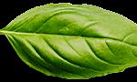 basil-leaf.png